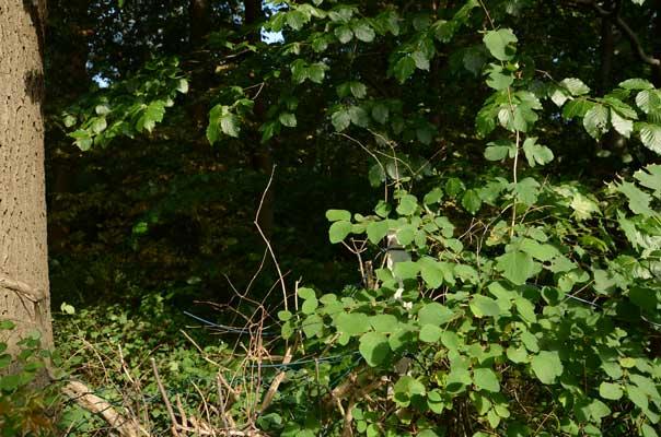 Bevor man im Wald auf die Pirsch gehen darf, ist eine Jagdprüfung erforderlich - Foto: JPH