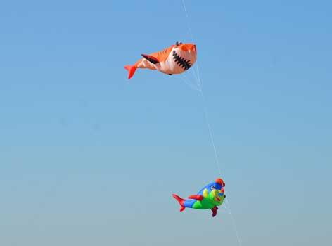 Ein Hai und ein Clownsfisch schweben einträchtig über dem Roten Berg - Foto: JPH