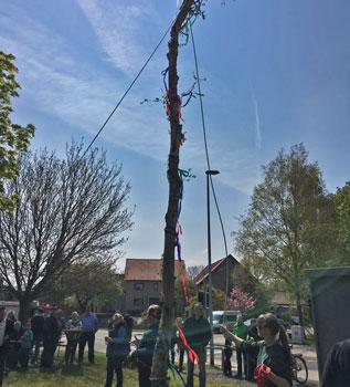Mit vereinten Kräfte stellte sich der Maibaum auf - Foto: B. Nolle